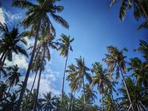 Ладони кокоса на заходе солнца стоковые фото