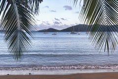 ладони кокоса пляжа тропические Стоковое Изображение RF