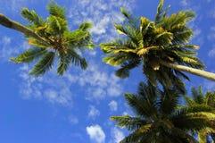 ладони кокоса стоковое фото