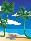 ладони ландшафта тропические Стоковые Фото