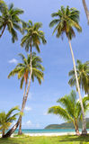 ладони пляжа Стоковое Фото