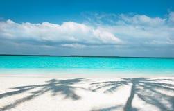 ладони пляжа Стоковые Фотографии RF