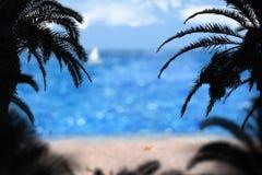 ладони пляжа Стоковые Фото