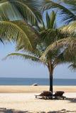 ладони пляжа Стоковая Фотография