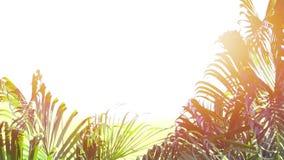 Ладонь бетэла выходит с оранжевым светом акции видеоматериалы