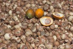 Ладонь бетэла, оно сельскохозяйственный продукт ` s Стоковое Изображение RF