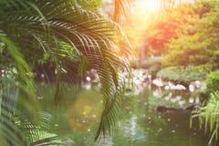 Ладонь выходит малая глубина конца-вверх детали поля, мягкий фокус с солнечным светом и красочная предпосылка bokeh Стоковое Фото