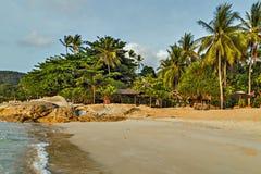 Ладонь в пляже песка Koh Samui, Таиланд Стоковое Изображение