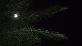 Ладонь 3 и свет луны ночью акции видеоматериалы