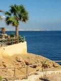 ладонь кафа пляжа Стоковые Изображения