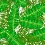 Ладонь кокоса и ладонь банана выходят безшовная картина Шаблон ярлыка Иллюстрация вектора с троповым мотивом Стоковые Фото
