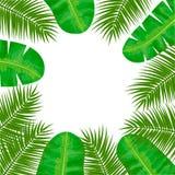 Ладонь кокоса и ладонь банана рамка листьев Центральное место для текста Шаблон ярлыка Иллюстрация вектора с троповым мотивом Стоковые Изображения RF