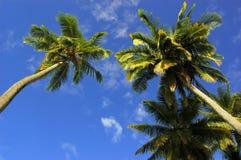ладонь кокоса стоковое изображение rf