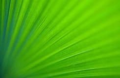 ладонь листьев изображения крупного плана гигантская зеленая Стоковые Фото