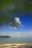 ладонь листьев кокоса Стоковая Фотография