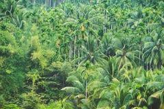 ладонь листьев предпосылки зеленая Стоковые Изображения RF