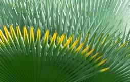ладонь листьев предпосылки Стоковые Изображения RF