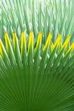 ладонь листьев предпосылки Стоковая Фотография