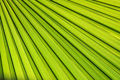 ладонь листьев предпосылки Стоковые Фото