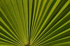ладонь листьев предпосылки Стоковые Фотографии RF