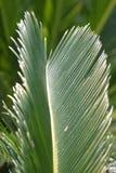 ладонь листьев стоковое изображение rf