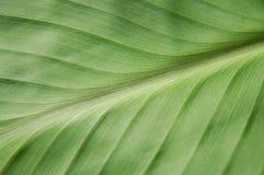 ладонь листьев Стоковое фото RF
