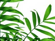 ладонь листьев Стоковые Фото