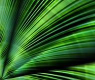 ладонь листьев иллюстрация вектора