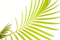 ладонь листьев стоковые изображения