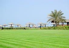 ладонь лужайки пляжа Стоковая Фотография
