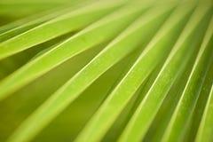 ладонь макроса листьев Стоковая Фотография RF