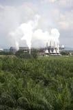 ладонь масла фабрики Стоковые Фотографии RF