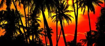 Ладонь на заходе солнца Стоковая Фотография RF