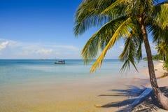 Ладонь на пляже песка отмелой лазурной шлюпкой моря на горизонте Стоковое Изображение RF