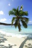 Ладонь на предпосылке пляжа и моря Стоковые Изображения