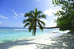 Ладонь на предпосылке пляжа и моря Стоковая Фотография