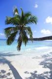 Ладонь на предпосылке пляжа и моря Стоковые Фото