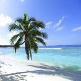 Ладонь на предпосылке пляжа и моря Стоковые Фотографии RF