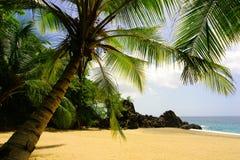 ладонь пляжа тропическая Стоковая Фотография RF