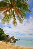 ладонь пляжа стоковое фото