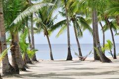 ладонь пляжа стоковое фото rf