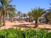 ладонь пляжа стоковая фотография rf