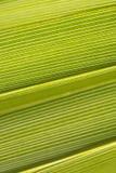 ладонь предпосылки зеленая Стоковое фото RF