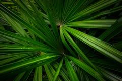 Ладонь предпосылки листьев ладони выходит предпосылка Стоковая Фотография RF