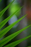 ладонь тропическая Стоковые Фото