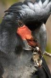 ладонь cockatoo Стоковые Изображения RF