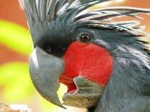 ладонь cockatoo стоковая фотография rf