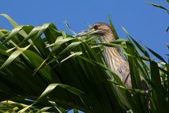 ладонь frond птицы стоковое изображение rf