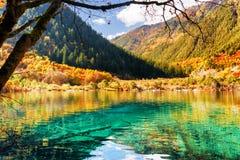 Лазурная вода озера среди древесин падения в долине Shuzheng Стоковое фото RF