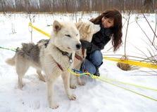 Лайка молодой женщины и собаки сибирская Стоковые Фото